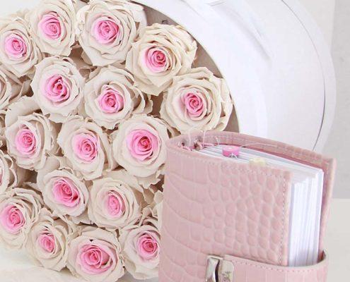 ringlose planer elfenklang kroko rosa